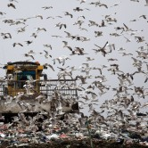 toxic timebomb landfill sites