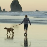 dog walk at the beach